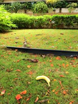 道端にバナナ.jpg