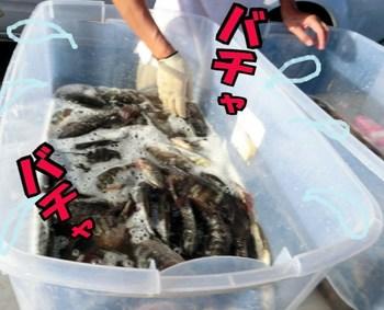 生きた魚.jpg
